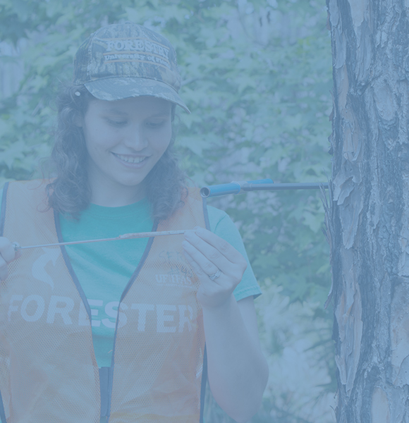 Female CALS student wearing a hardhat and orange vest taking a sample form the trunk of a pine tree.