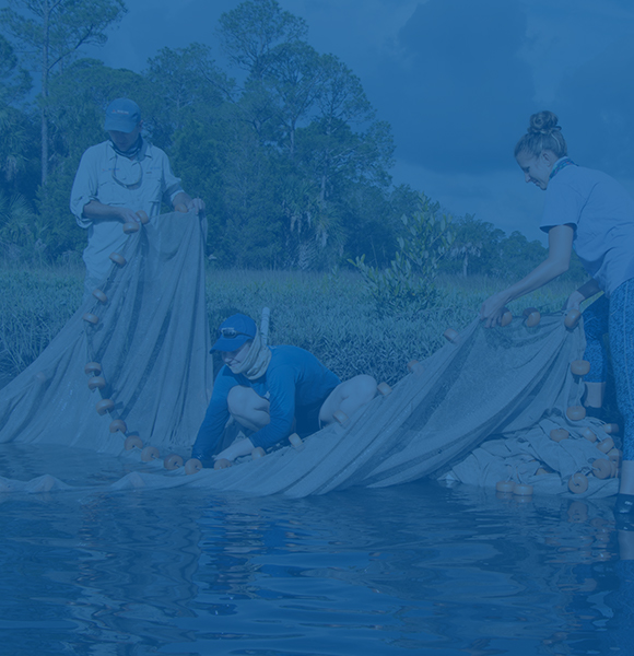 Three female CALS students wearing outdoor clothing pull a large net out of a body of water.