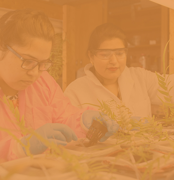 Two female CALS students in lab coats and gloves carefully inspect plant samples in a lab.