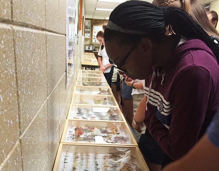 Prospective CALS student observes a butterfly display case at a museum, more students are visible behind her.